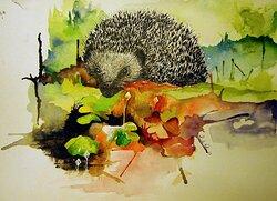 Hedgehog on a walk