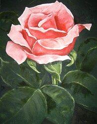 Rosa ros med blad