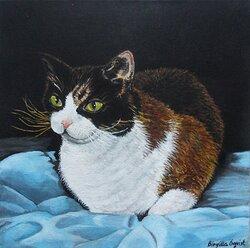 Mys Katt