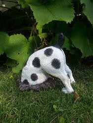 Grävande hund