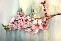 Persika blommning