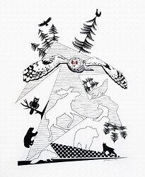 Djur i norden - Uggla