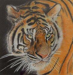 Tiger 1, inramad