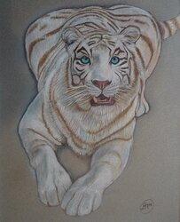 Vit tiger 1