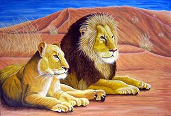 Lejon i Kalahariöknen