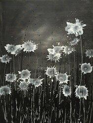 Dandelion Dawn