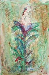Ligustrum (Liguster), ört nr 4 i Flora Svecica