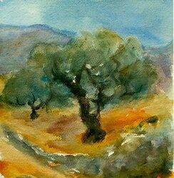 Olivträd II