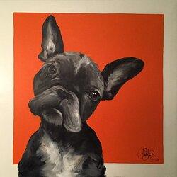 DOG 31