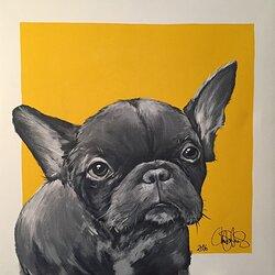 DOG 33