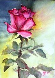 En ros för dig