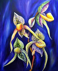 Orchid - The Paphiopedilum , known as Lady's Slipper