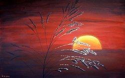 Solen o gräsvippan