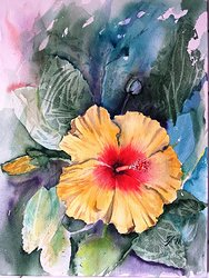 Gul hibiskus