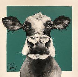 Cow 186