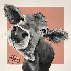 COW 240