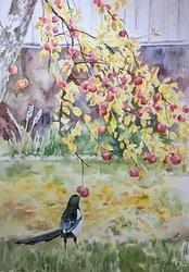 Äppelkännare