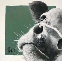 COW 251