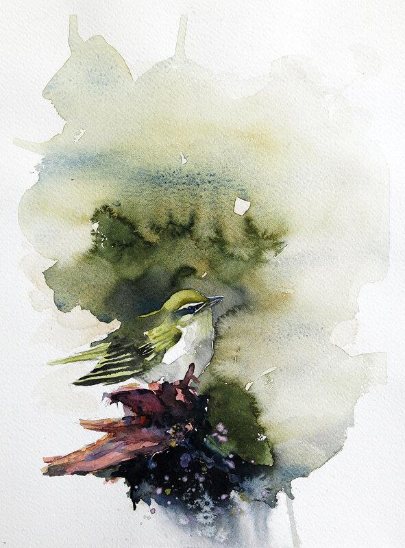 Akvarell Grönsångaren, Daniel Luther